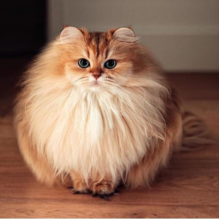 Gambar Foto Kucing Comel