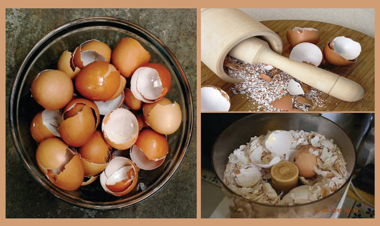 Why You Should Not Throw Away Eggshells