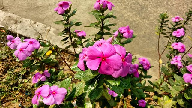 flower images photography by suman dhawa