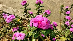 Image of a Random Flower