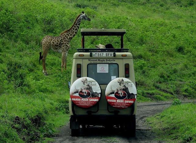 Taman Safari Di Indonesia yang Cocok Jadi Destinasi Wisata Akhir Pekan