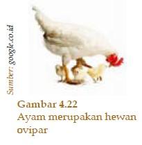 Perkembangbiakan pada Hewan Avertebrata dan Vertebrata