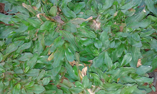 Jual Rumput Gajah Mini di Cibubur,Tukang Rumput Taman di Cibubur,Suplier Rumput Taman di Cibubur,Jual Rumput Taman di Cibubur