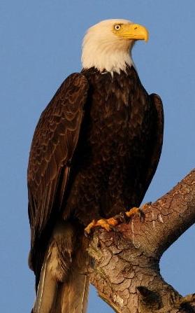 Eagle S Teen 102