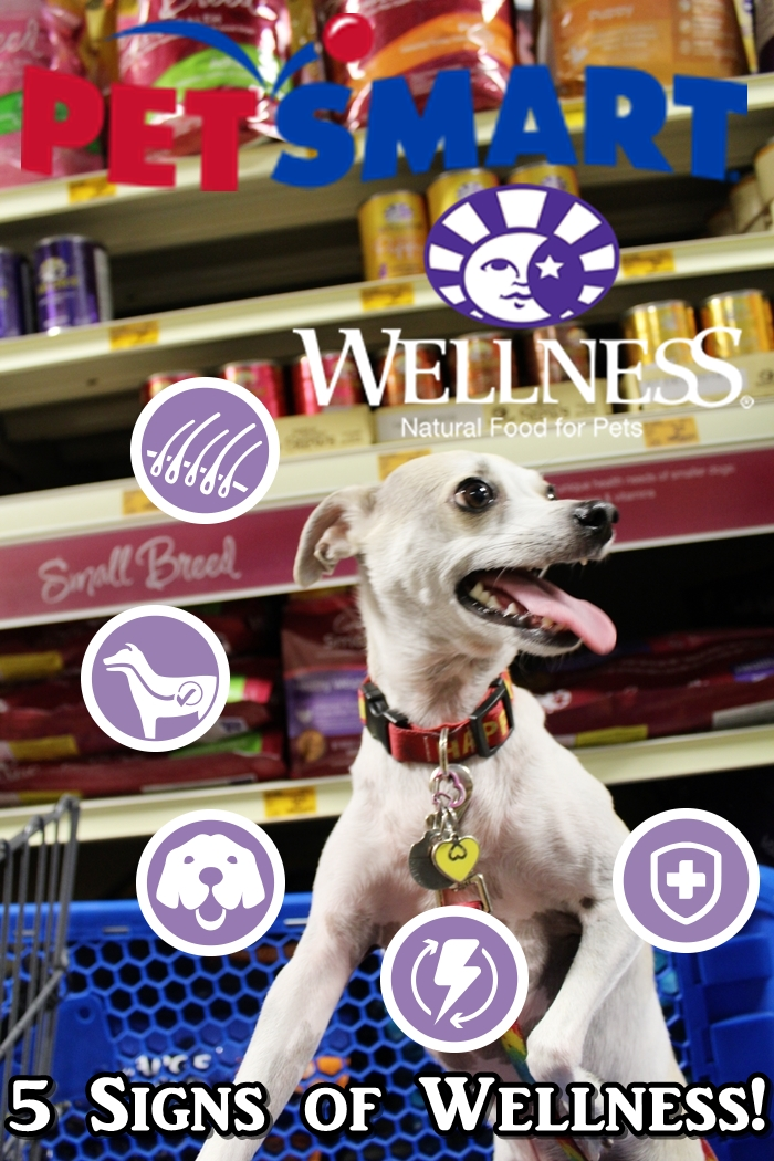 Finding 5 Signs of Wellness at PetSmart! #WellnessPet Dog Food Review