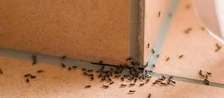 طريقة التخلص من النمل في البيت بـ 7 طرق