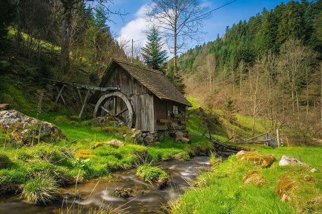Rừng đen nước Đức
