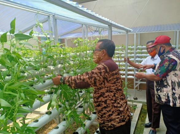 Kwarda Gerakan Pramuka Lampung Lakukan Panen Perdana Sayuran Sistem Hydroponik