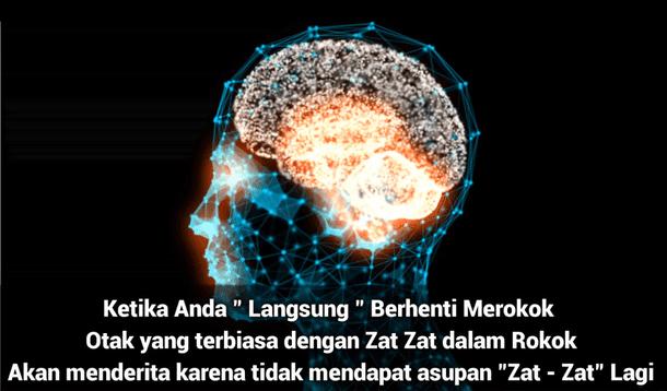 Otak Terbiasa dengan Zat-Zat dalam Rokok