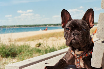 6 Things You Can Do to Keep Your Dog Healthy