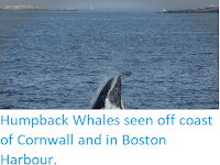 http://sciencythoughts.blogspot.com/2019/08/humpback-whales-seen-off-coast-of.html