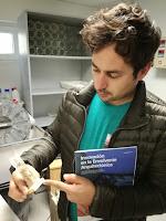 Muestra de probeta de madera con biocida