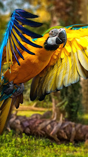Macaw Parrot Mobile HD Wallpaper