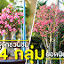 ทำความรู้จักชวนชมพันธุ์ยักษ์ 4 กลุ่ม ในประเทศไทย