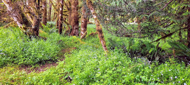Ferns and Wildflowers