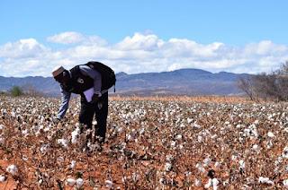 UFCG debate acordo de cooperação técnica de apoio à agricultura na África