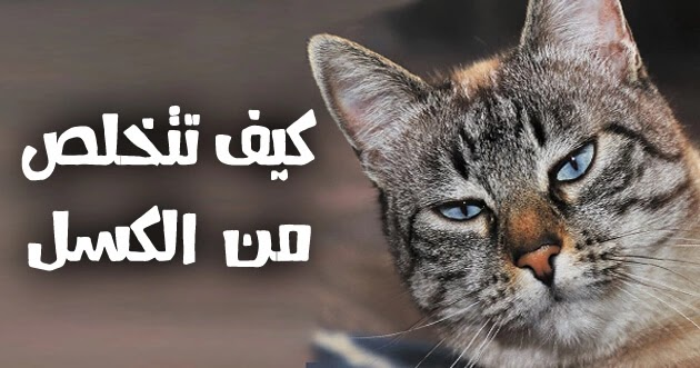 قطة كسولة