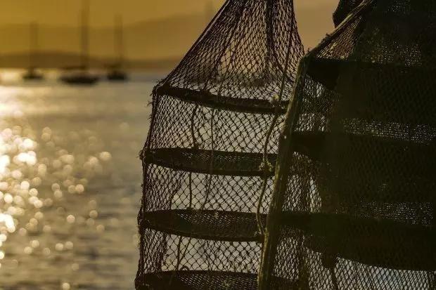Ácido provoca suspensão do cultivo e comercialização de ostras e mexilhões em áreas de SC