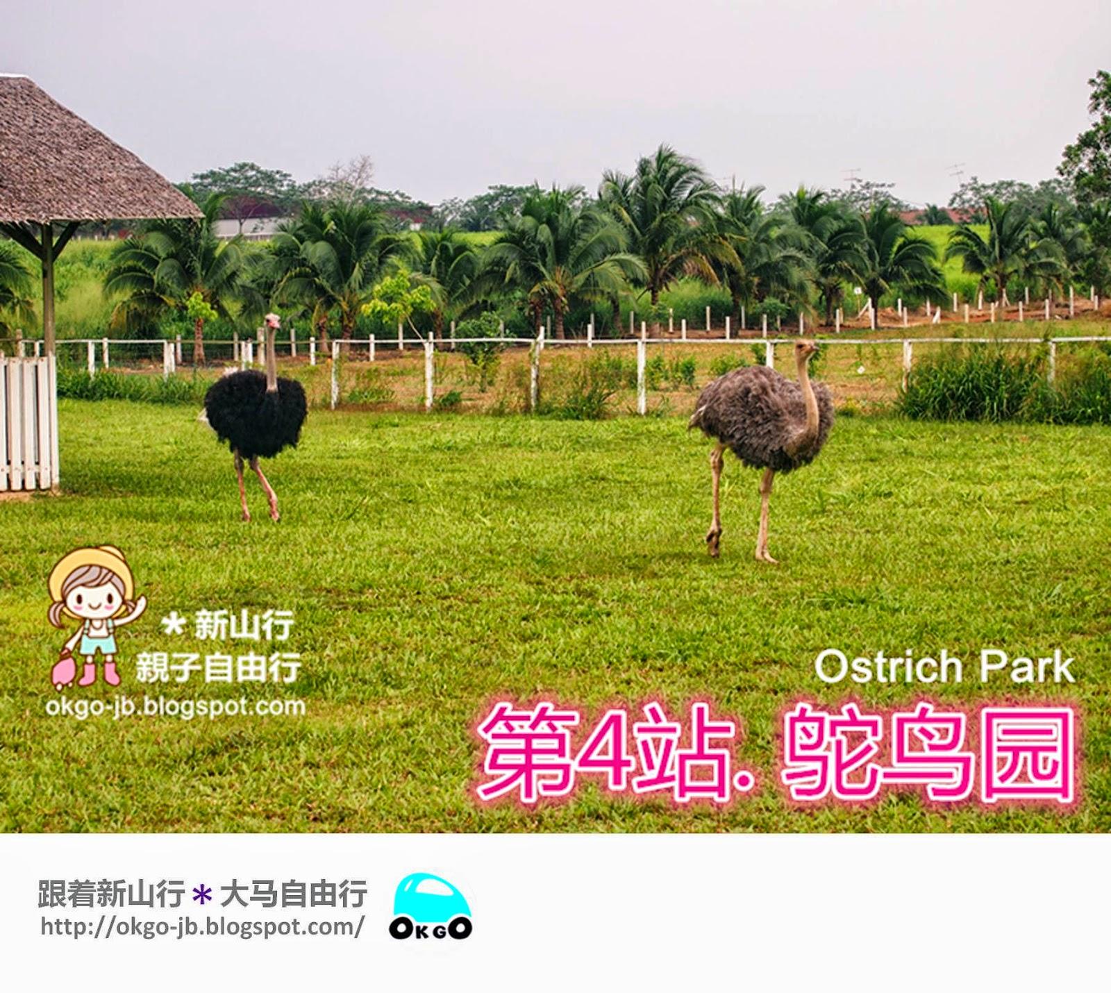 Kluang UK Farm ostrich
