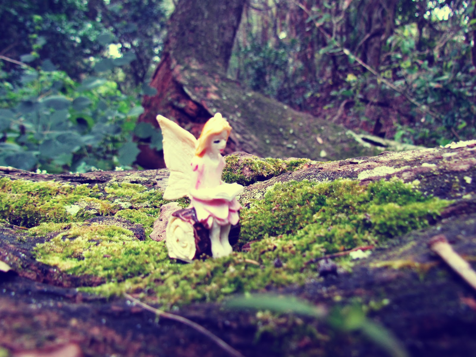 A fairy reading a book on a moss-covered oak in the forest during wintertime in Florida in a local park