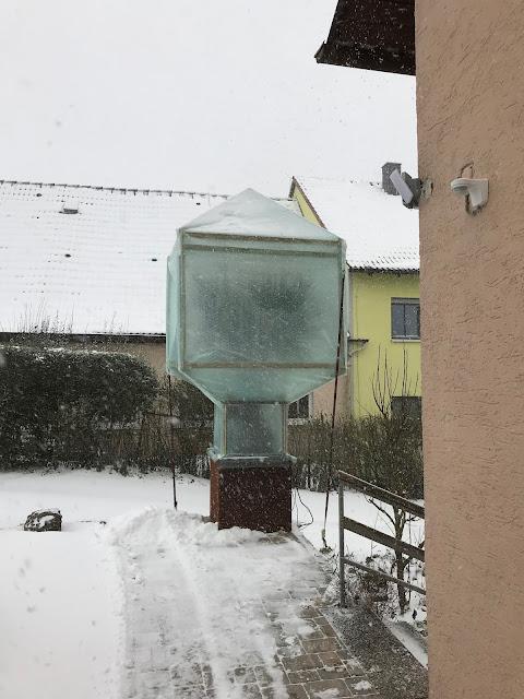 Winterschutz für Palme im Freiland