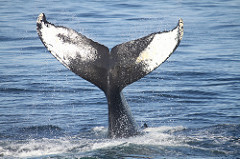 Charity Navigator Celebrates World Whale Day!