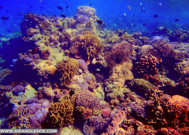best diving spots in the Philippines