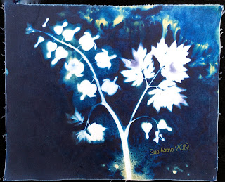 Wet cyanotype_Sue Reno_Image 601