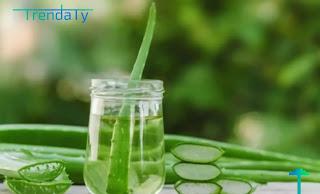 اهم فوائد صبار الالوفيرا للبشرة والشعر وبعض الأمراض الأخرى