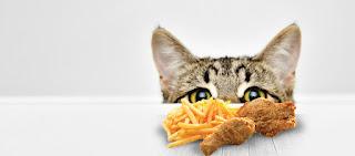 نبذة صغيره عن اكل القطط في الاعمار الصغيرة شهرين موقع كاتس للقطط