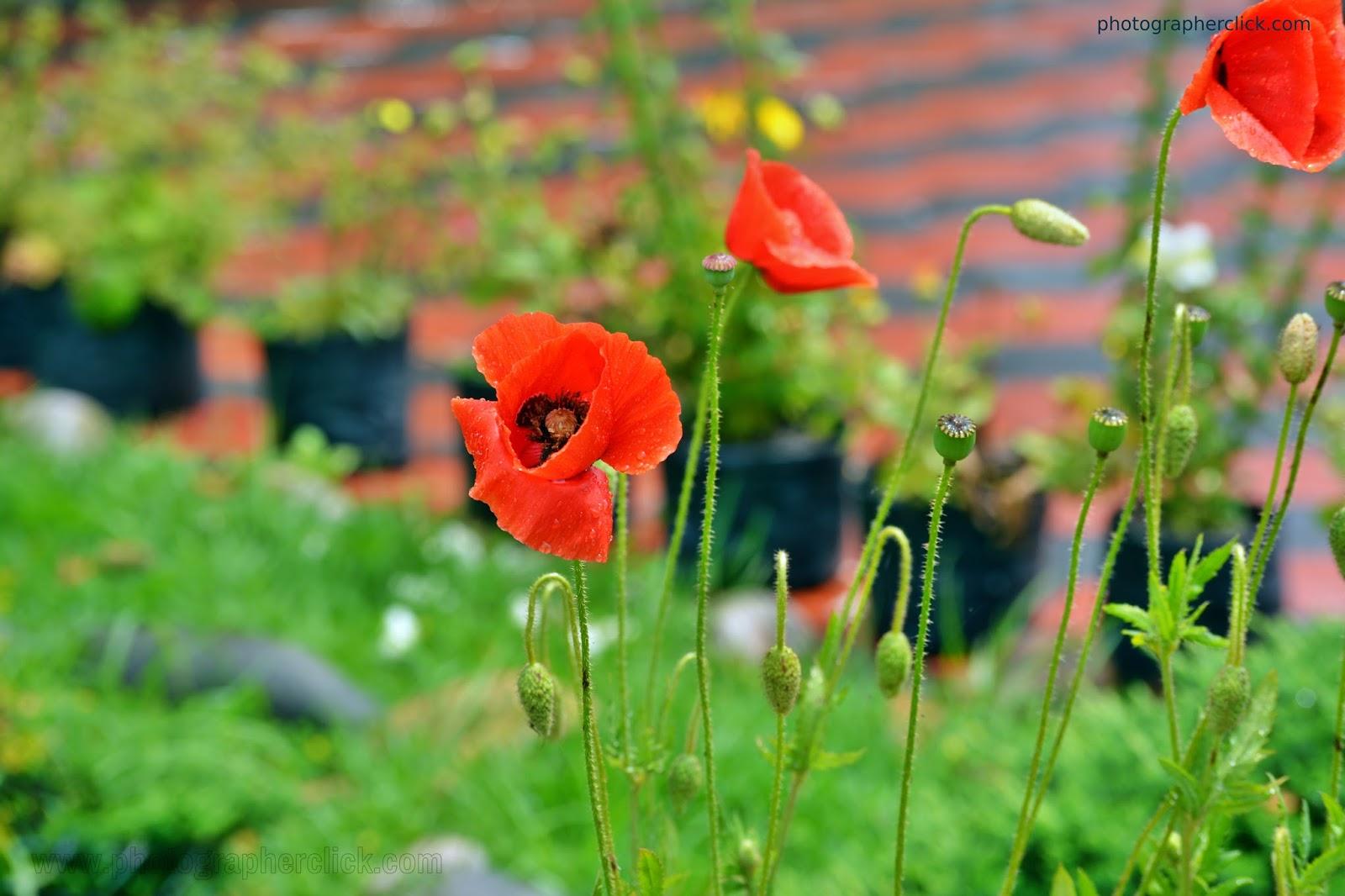 Beautiful flower in garden photographer click beautiful flower in gardenis izmirmasajfo