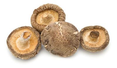 Mushroom Supplier Company in Ranchi