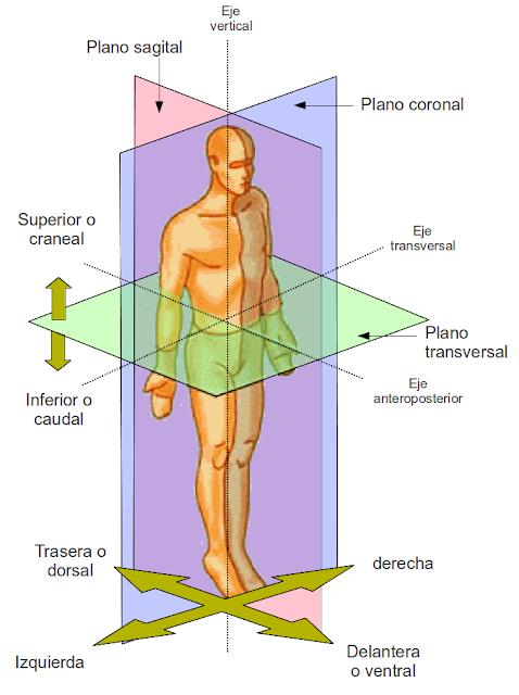 Diferenciación de los planos y ejes anatómicos por medio de colores