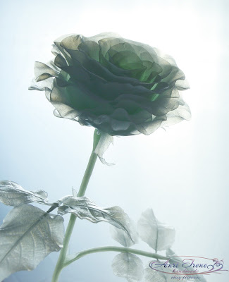 Monochrome rose transparent green