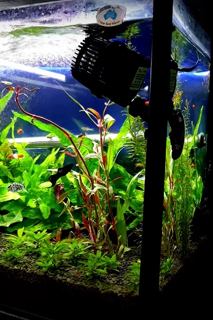 Position of wavemaker in fish tank