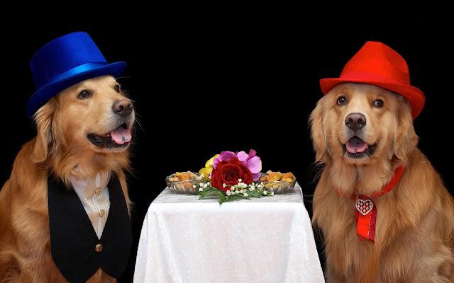 Twee honden aan een tafeltje
