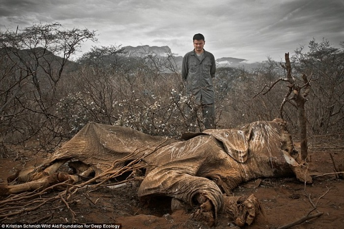 20 Pictures That Prove That Humanity Is In Danger - An elephant killed by poachers and left to rot