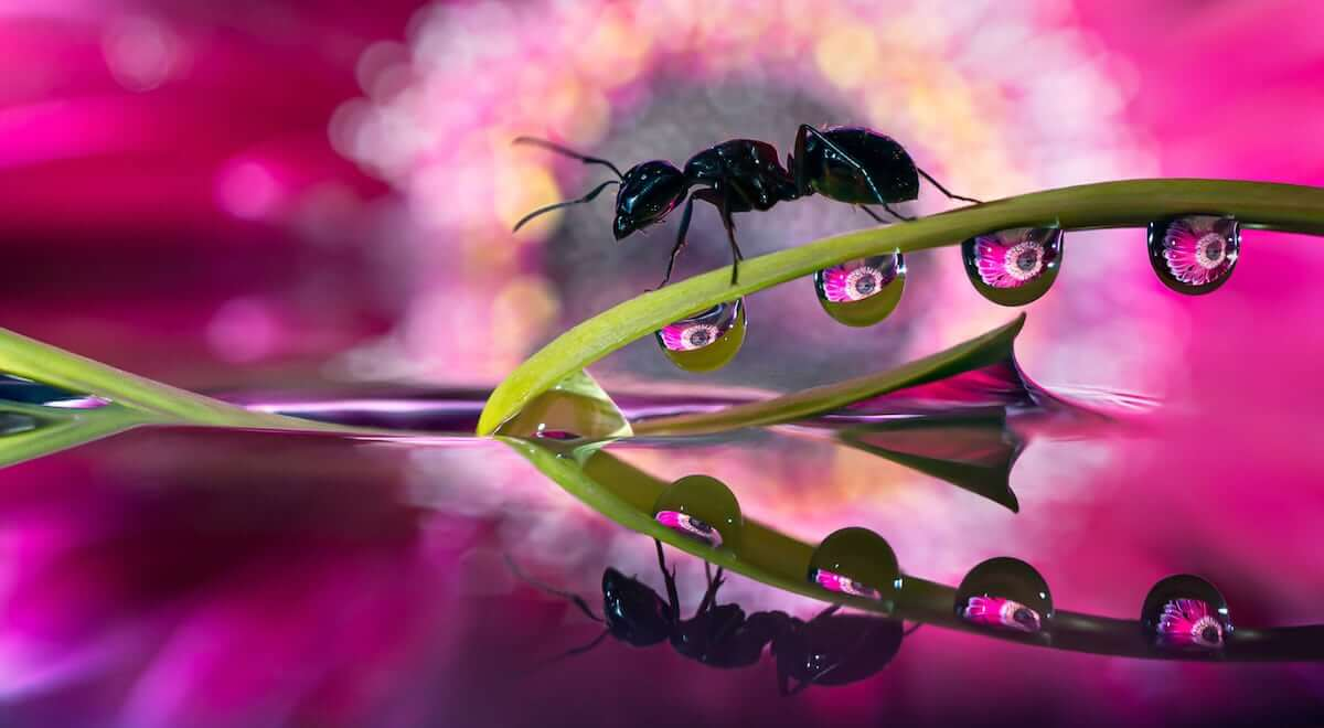 Macro Photographs Of Water Droplets Show Nature's Overlooked Beauty