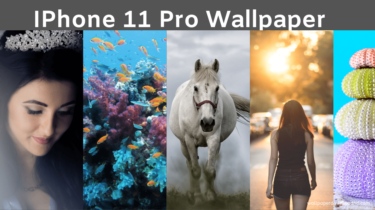 Download Iphone 11 And Iphone 11 Pro Wallpapers 2020 Cute Wallpaper Iphone