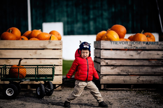 Boy with fierce expression pulling pumpkin in wagon
