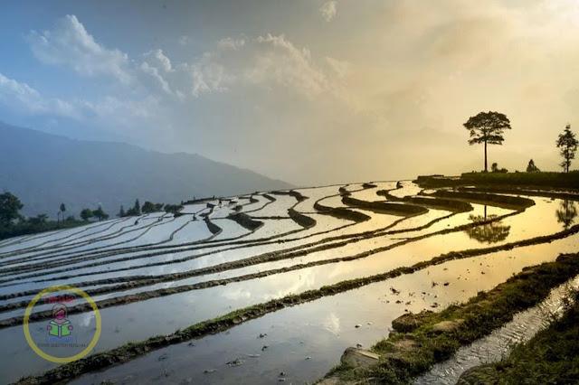Advantages and disadvantages of organic farming | Krishi Loksewa