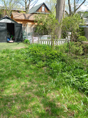 Riverdale Backyard Garden Spring Cleanup Before by Paul Jung Gardening Services--a Toronto Gardening Company