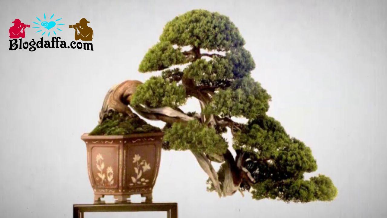 Hama dan penyakit bonsai kemuning