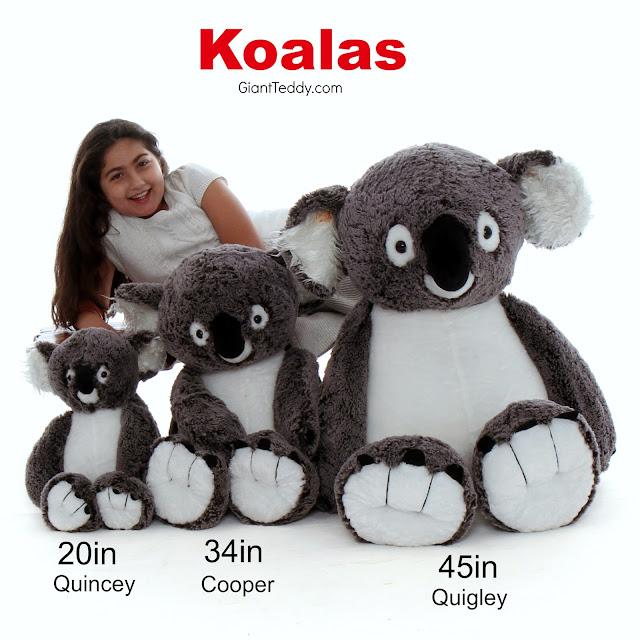 Meet the Koala Family at GiantTeddy