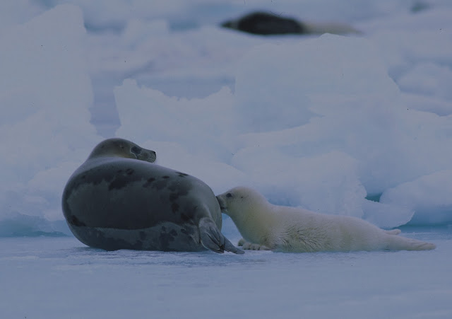 Food-that-I-will-Never-Eat-Again-Seal-Flipper