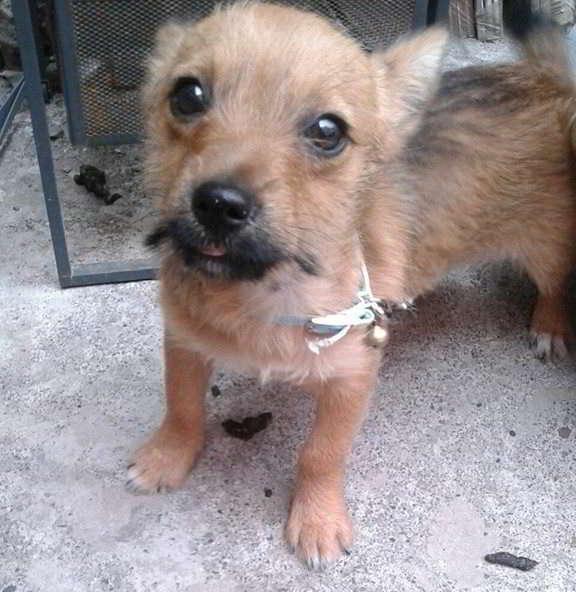 cachorro tamaño pequeño