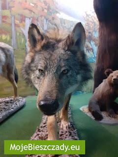 Muzeum Przyrodnicze Bieszczadzkiego Parku Narodowego w Ustrzykach Dolnych