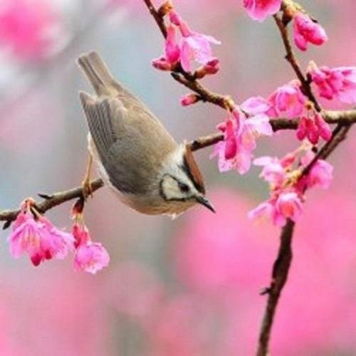Pássaro em galho de flores. #PraCegoVer