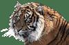 Tiger Name in Hindi
