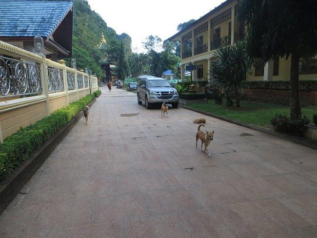 Собачья стая из дворовых собак
